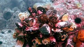 Shells en zeeëgels onder rotsen op zeebedding stock videobeelden