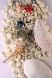 Shells en zeester Stock Afbeeldingen