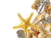 Shells en zeester Stock Foto