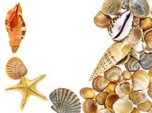 Shells en zeester Stock Fotografie