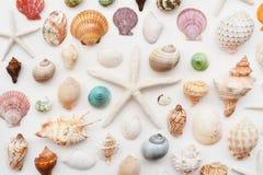 Shells en zeester Stock Afbeelding