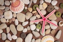 Shells en zeesterren Royalty-vrije Stock Afbeelding