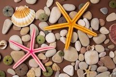 Shells en zeesterren Stock Foto