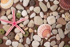 Shells en zeesterren Stock Fotografie
