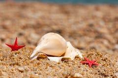 Shells en zeesterren bij het strand Stock Afbeelding