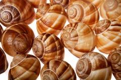 Shells of escargot against white background Royalty Free Stock Photo