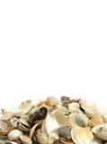 Shells exemplaar-deeg Stock Afbeeldingen