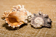 Shells on the fabric Royalty Free Stock Photos