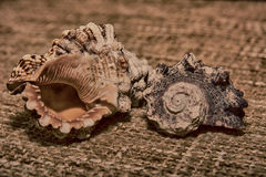 Shells on the fabric Stock Photography