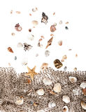 Shells falling on a fishing net Royalty Free Stock Photo