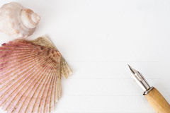 Shells and feather. On paper background Stock Photo