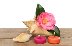 Shells flower and candles Royalty Free Stock Images