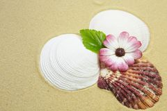 Shells and flower on a sandy beach. Shells and pink flower with leaf on a sandy beach Stock Images