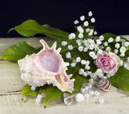 Shells and flowers Royalty Free Stock Image