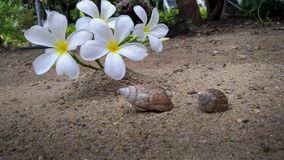 Shells and flowers lay on the sand.  Stock Photo