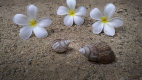 Shells and flowers lay on the sand.  Stock Photography