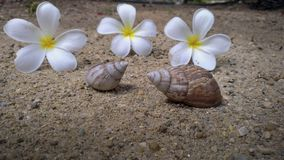Shells and flowers lay on the sand.  Royalty Free Stock Images