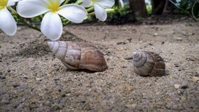 Shells and flowers lay on the sand.  Stock Image
