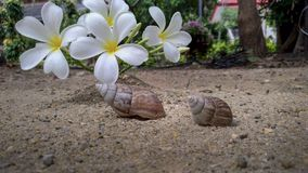Shells and flowers lay on the sand.  Royalty Free Stock Image