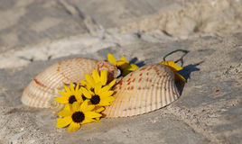 Shells and flowers. In a very pretty setting on the beach Stock Images