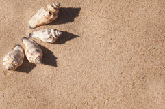 Shells Royalty Free Stock Photography