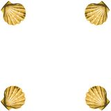Shells frame (vector). Abstract background made to the computer Stock Photo