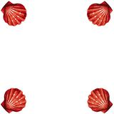 Shells frame (vector) Stock Photos