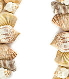 Shells frame on white Royalty Free Stock Photos