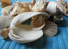Shells galery Stock Images