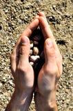 Shells in gesloten handen Royalty-vrije Stock Afbeeldingen