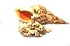 Shells getrennt auf Weiß mit Perlen Stockfotos