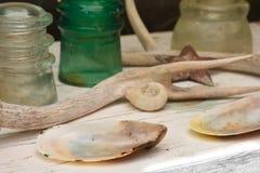 Shells, Geweitakken en Glas Collectibles stock afbeeldingen