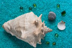 Shells and glass balls on bath salts Stock Photography
