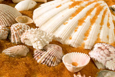Shells on golden sand Stock Image