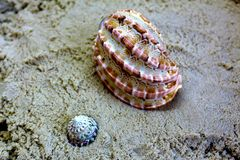 Ocean yellow sand and seashells. Shells on the Golden sand on the sea beach at sunset. royalty free stock photos