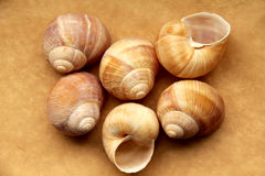 Shells of grape snails Royalty Free Stock Photography