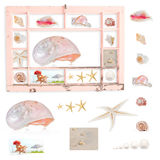 Shells in grungy painted frame. Grungy, peeling peach window frame with shells, with clipping path for frame and uncropped contents Stock Photo