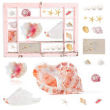 Shells in grungy painted frame. Grungy, peeling peach window frame with shells, with clipping path for frame, and uncropped contents Stock Photography