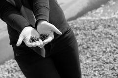 Shells in haar handen Stock Afbeelding