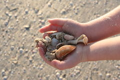 Shells in hand. Shells in a child's hands royalty free stock photos