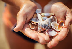 Shells in the hand Royalty Free Stock Image
