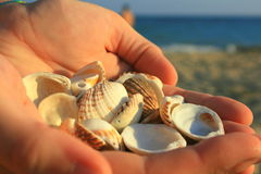 Shells in the hands. Sea shells in his hands against the background of the sea Stock Photos