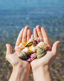 Shells in the hands. At the Red Sea Stock Images