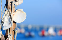Shells hanging charms without written Royalty Free Stock Photo