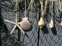 Shells hanging on a fence. Shells and netting on a fence Stock Photography