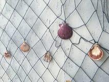 Shells hanging on a fishing net Stock Photos