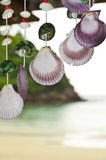 Shells hanging Stock Photos