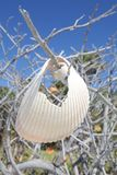 Shells Hanging In A Tree Stock Photography