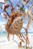 Shells Hanging In A Tree II. Nature is not complicated. Simple life with simple things. Very heart lifting Royalty Free Stock Photography