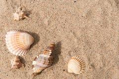 Shells in het zand, achtergrond Stock Foto